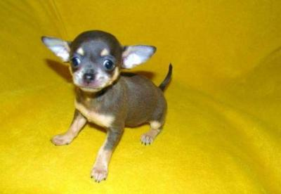 cuccioli in vendita a perugia con garanzie