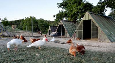 Fattoria con animali da cortile in Agriturismo Residence