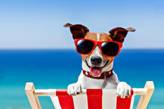 Spiaggia con cani ammessi in Veneto
