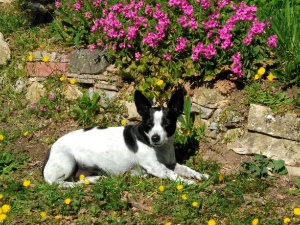 Casale pet friendly a Castiglione del Lago