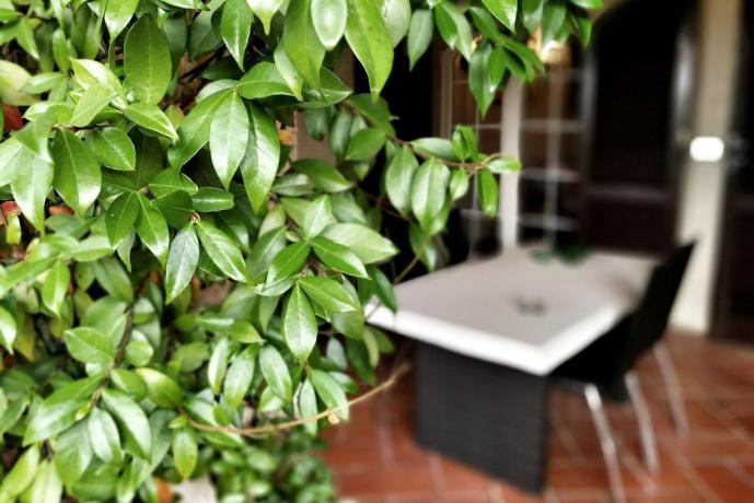 Siepe in giardino B&B ad Arezzo
