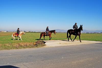 passeggiate a cavallo esterne per assisi