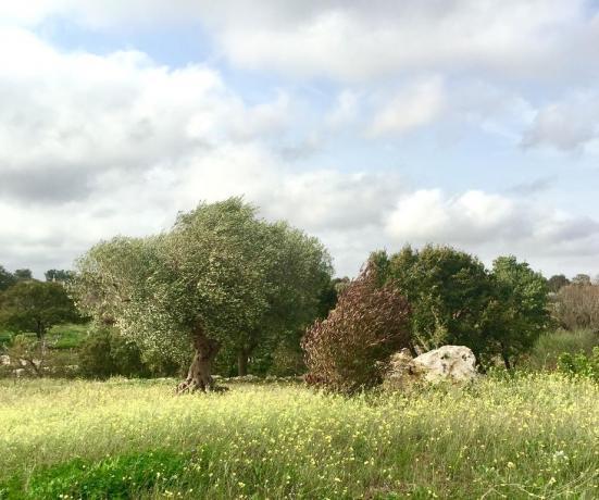 B&B a Bari con spazio verde per animali