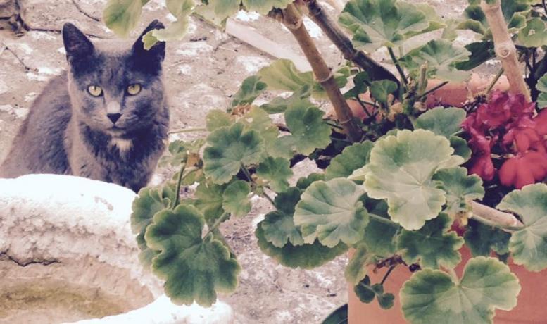 appartamenti vacanza con animali ammessi in Abruzzo