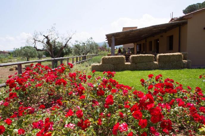 Giardino del Residence, camere e appartamenti vacanza
