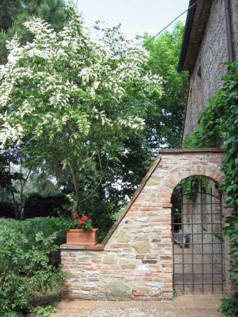 Giardino casale rustico Castiglione del Lago