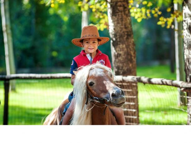 Mini pony a disposizione per lezioni e divertimento