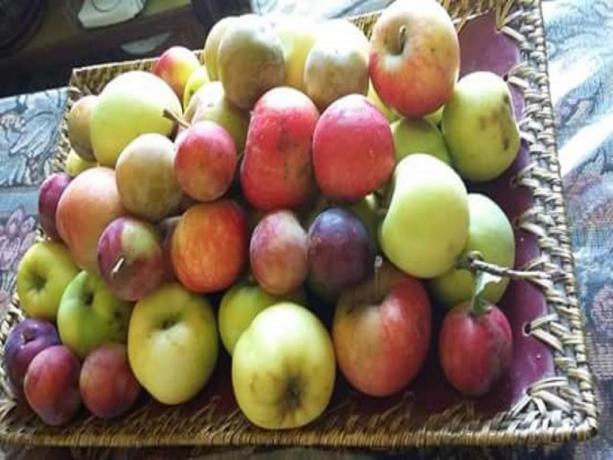 Cesto mele B&B Todi vicino Massa Martana