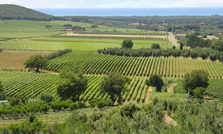 Colline, ulivi che circondano il residence, Toscana
