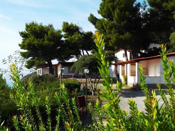 Campeggio a Palinuro, tra ulivi con spiaggia privata