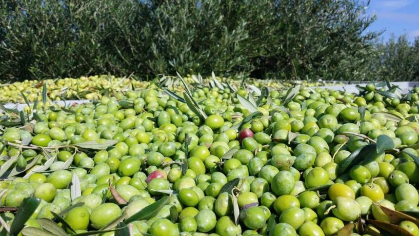 Azienda agricola produzione propria agriturismo Trapani