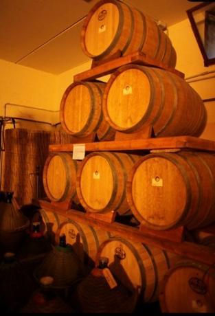 Cantina vinicola stessa proprietà