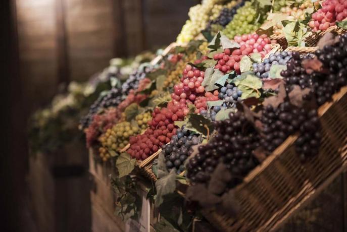 Vacanza in appartamenti, Museo del vino, Toscana,