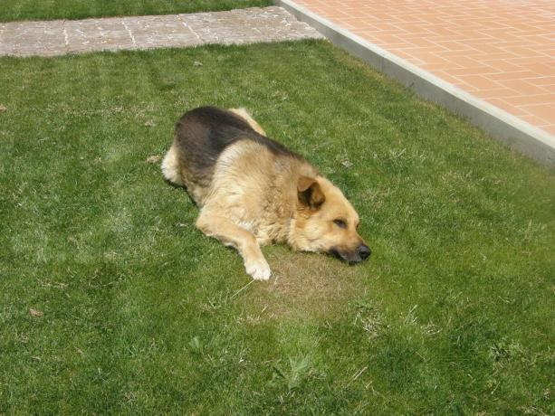 Appartamenti in Toscana animali ammessi