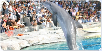 Dolphin show at low prices