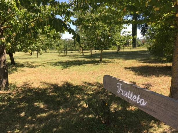 Agriturismo con alberi da frutto