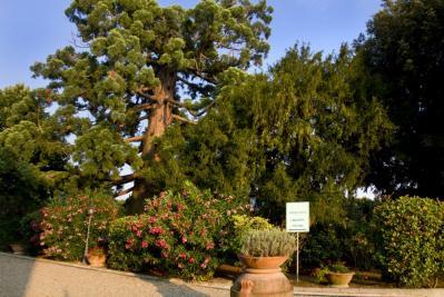 Alberi secolari del parco