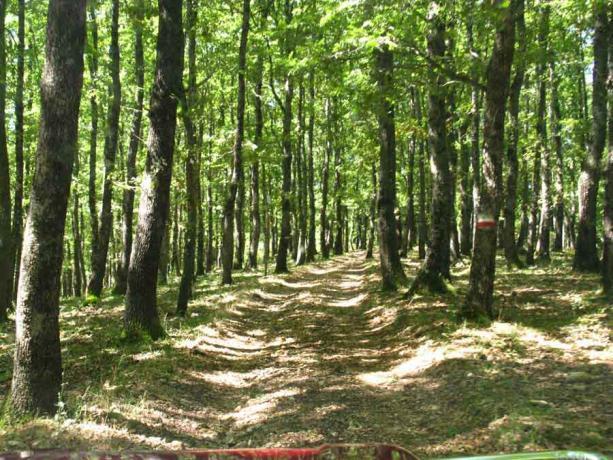 Escursioni nella Foresta Umbra dal B&B a Rodi