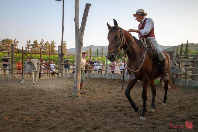 spettacolo cavalli vitelli cowboys butteri maremmani