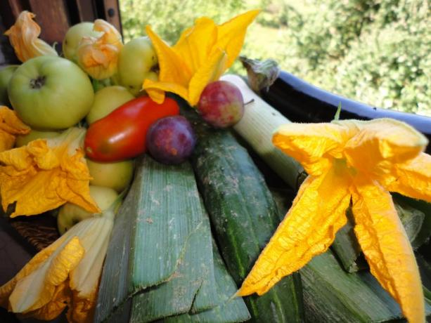 Ortaggi e frutta B&B Todi