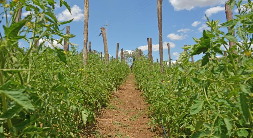 Agriturismo Rustico a Caltagirone prodotti Biologici