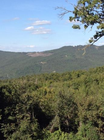Vista panoramica da Casale Agrituristico Torre Alfina