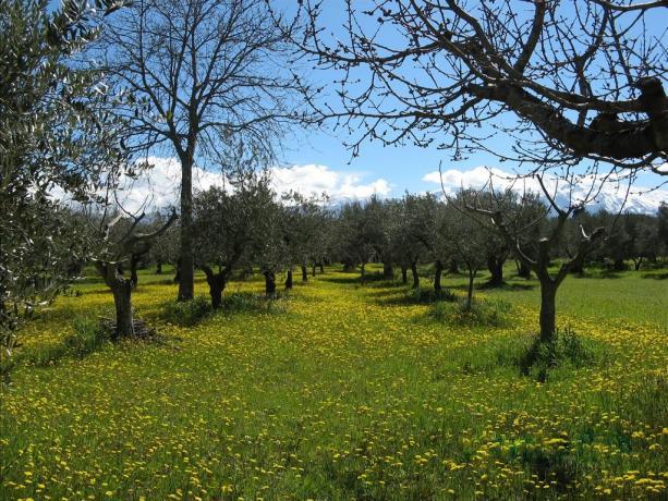 Appartamento in Abruzzo, con giardino ed uliveti