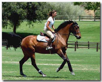 Campi equitazione in Umbria