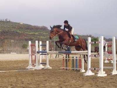 Corsi di equitazione costi la cura dello yacht for Quanto costa mantenere un cavallo