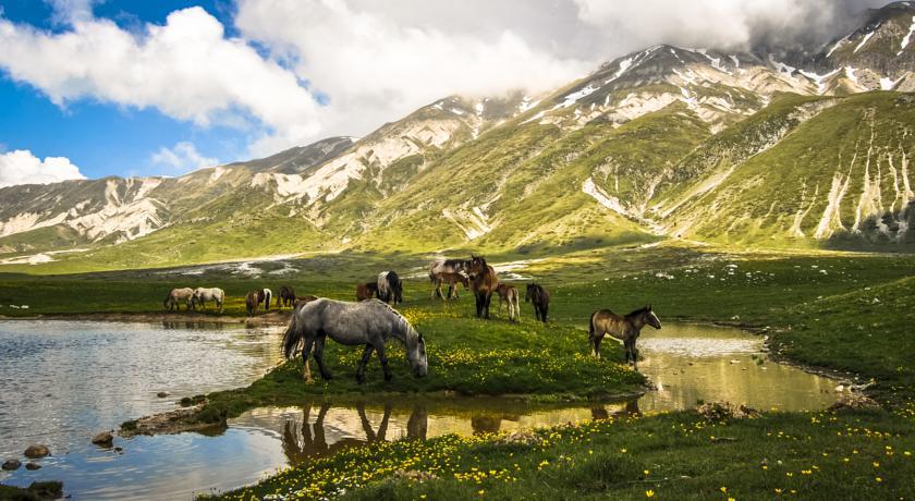 Cavalli alle pendici del Gran Sasso d'Italia