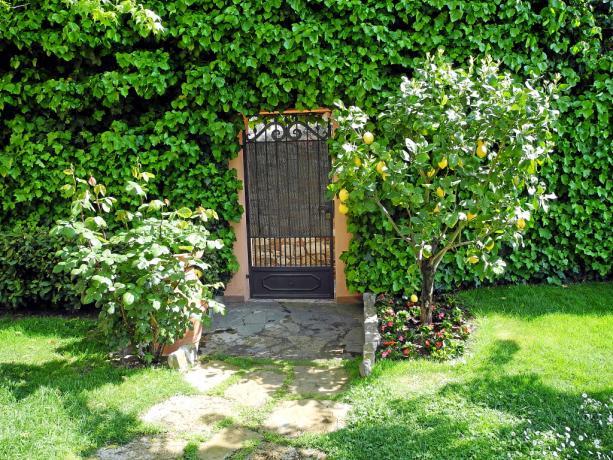 Giardino con albero di limone B&B in Umbria