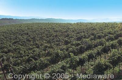 Campi coltivati ad agricoltura biologica