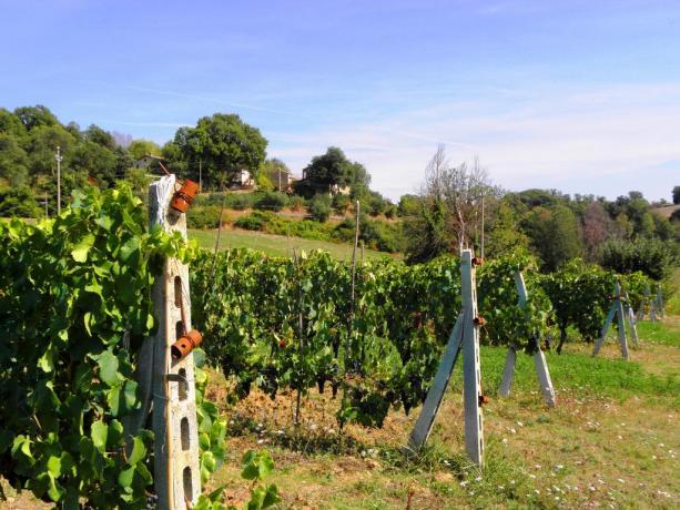 Agriturismo con Tenuta agricola e prodotti tipici Umbria