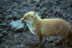 Natural Wildlife in the Park of Etna, Sicily