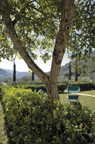 Ampi spazi verdi per gli ospiti