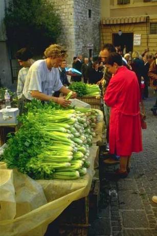 Trevi black celery