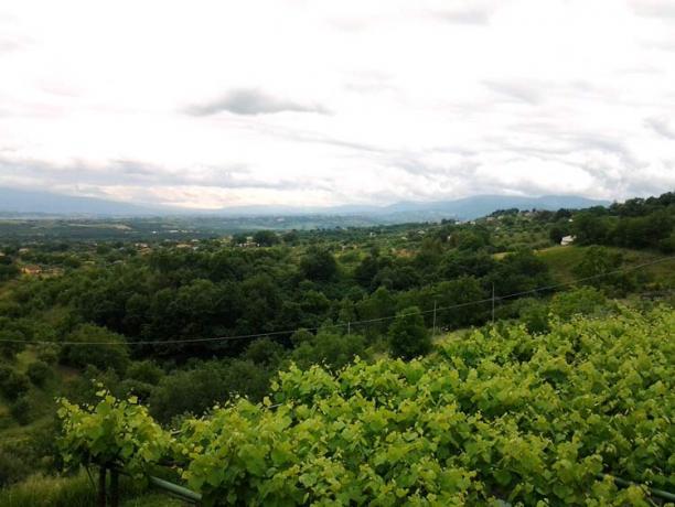 Casale con Ristorante Biologico in Calabria