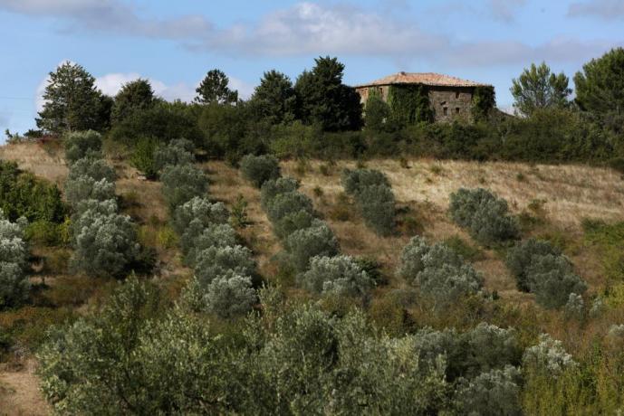 Tenuta deluxe con oliveto in quota Orvieto