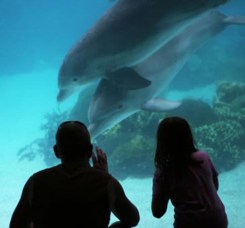 escursione acquario liguria visino hotel Varazze mare