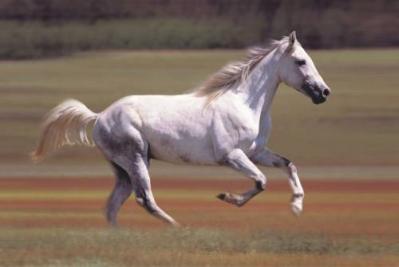 Equitazione per bambini e ragazzi in Umbria