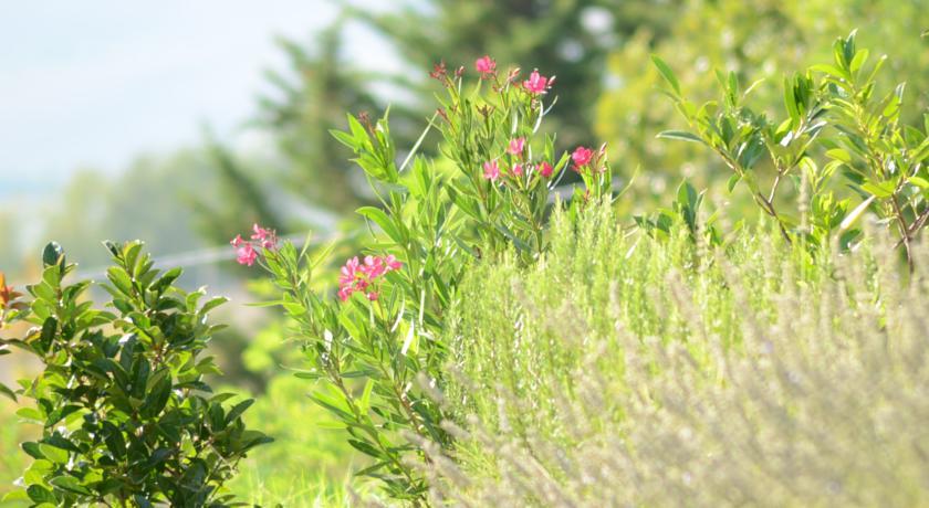 Dettaglio giardino fiorito