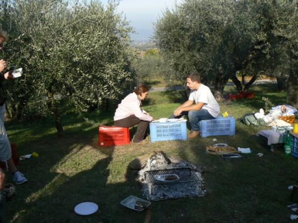 Momento Conviviale durante raccolta delle Olive