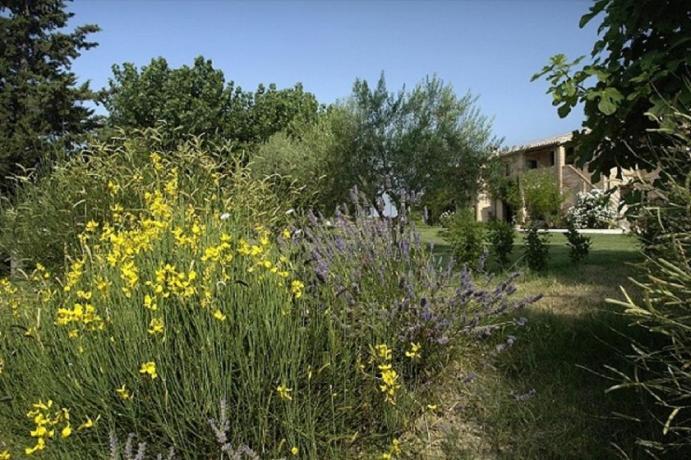 Enormi distese verdi in Agriturismo a Jesi