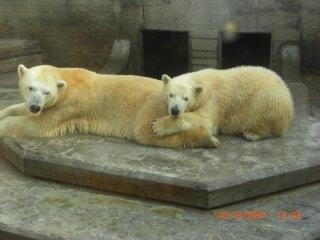 See polar bears in Tuscany