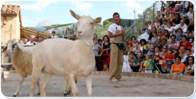 Shows with farm-animals