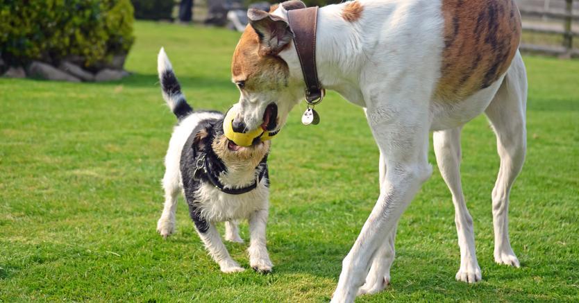 Casolare Gubbio ammessi animali domestici