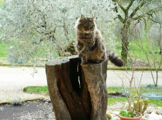 Gatto giardino Casale vicino Orvieto