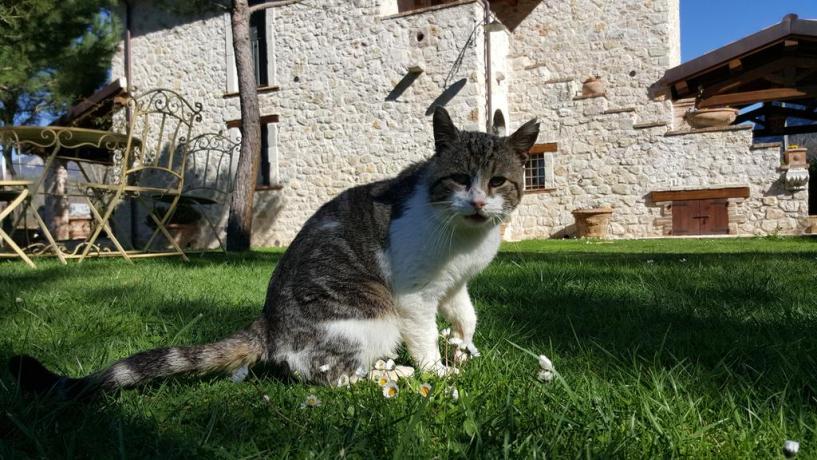 Gatto nel giardino della Country House a Ferentillo