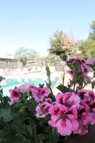 Fiori e piscina agriturismo Adrano vicino Parco Etna