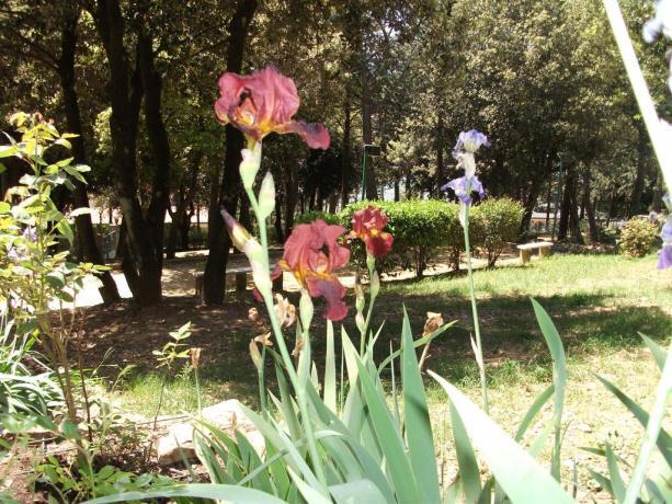 Fiori nel parco a Corciano